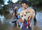 Evacuación de mascotas