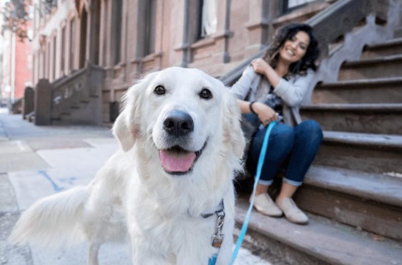 salva a tu mascota
